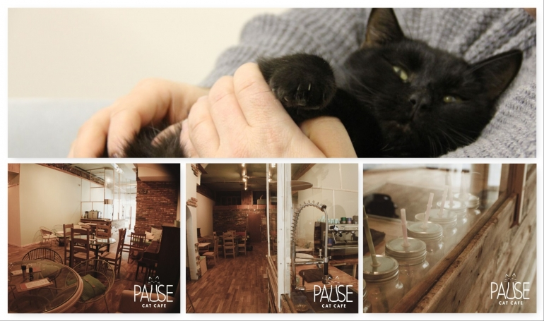 Bournemouth's Cat Cafe Opening Announced