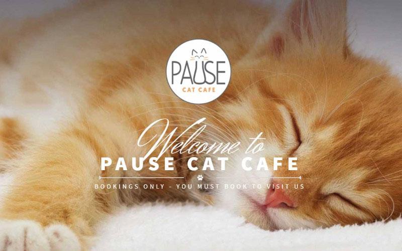 Pause Cat Cafe