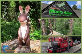 What's New at Moors Valley Country Park and Forest?