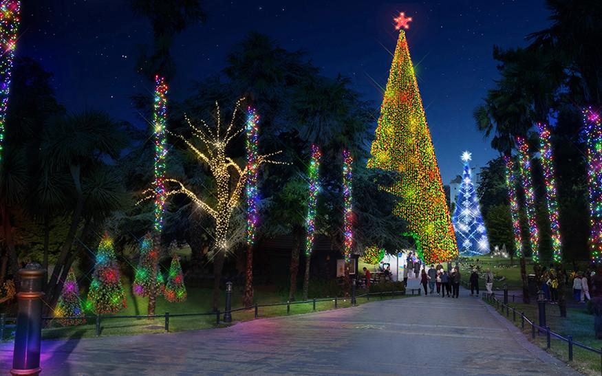 Christmas Tree Wonderland