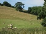 belhuish-farm-bb-wareham_100420141435357238.jpg