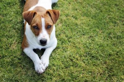 Slades Farm Doggy Play Patch