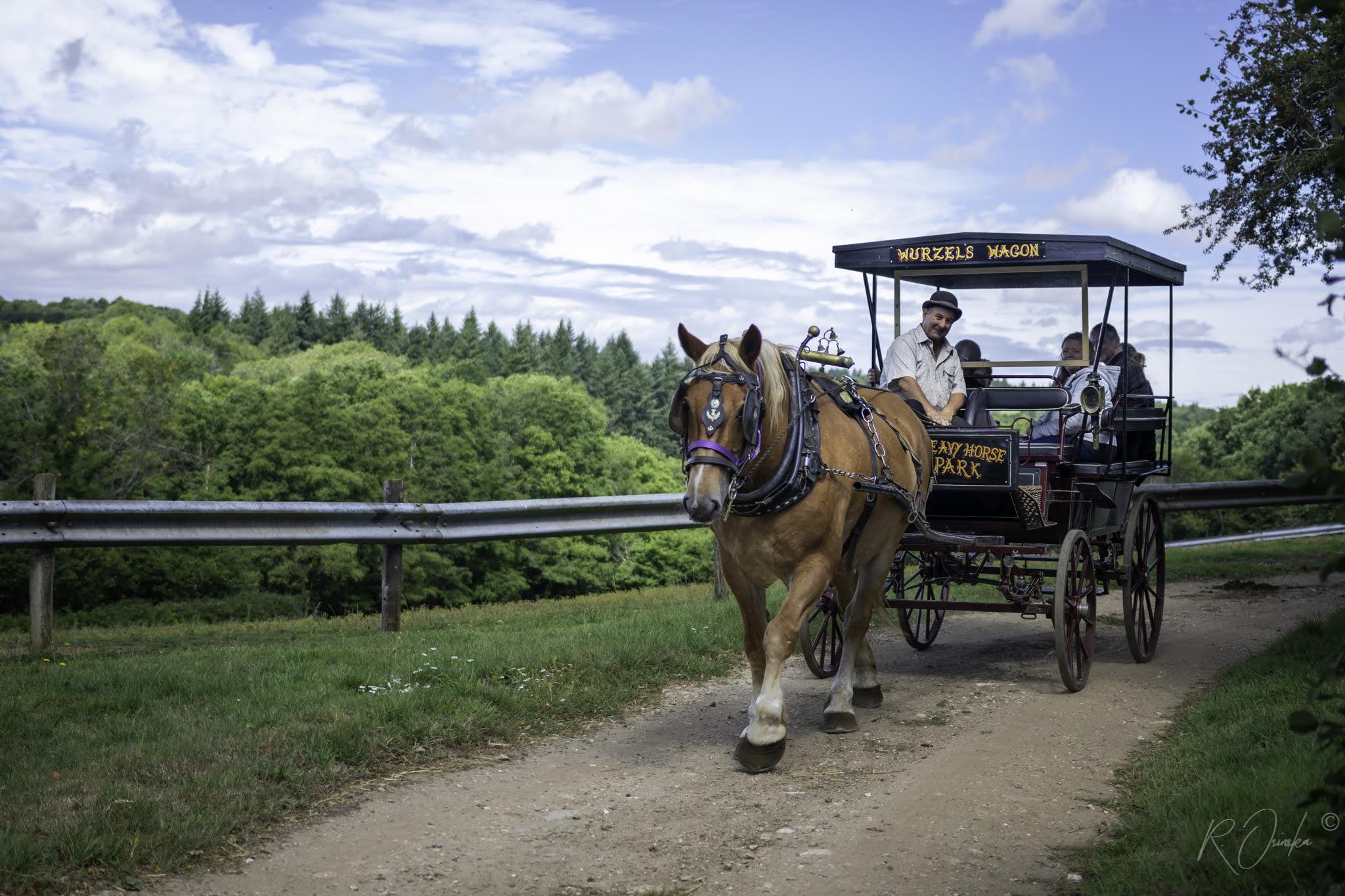 Dorset Heavy Horse Farm Park