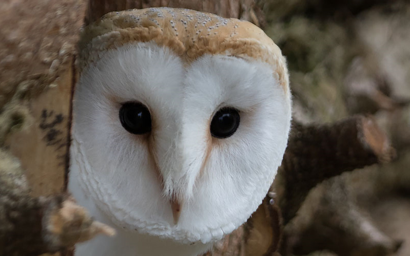 Liberty's Owl, Raptor & Reptile Centre