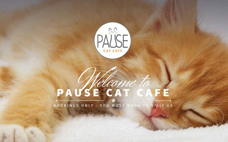 Pause Cat Cafe